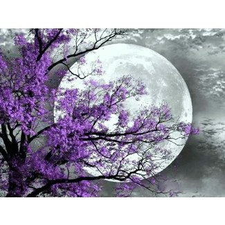 Black and white purple tree moon wall
