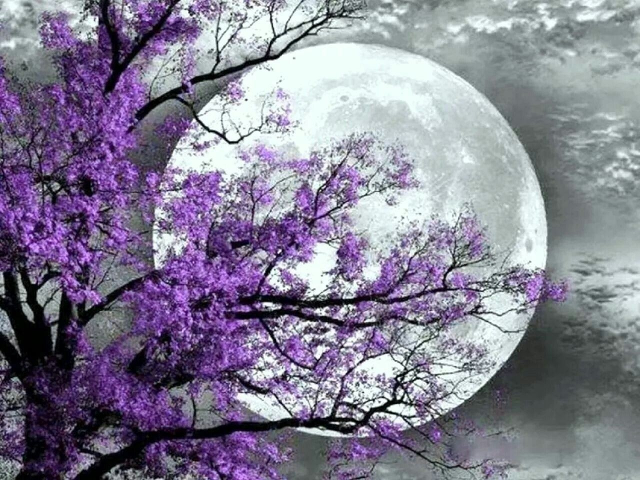 Black And White Purple Tree Moon Wall