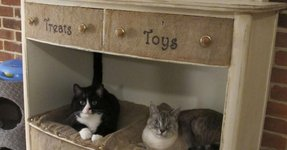Pet bed furniture 2