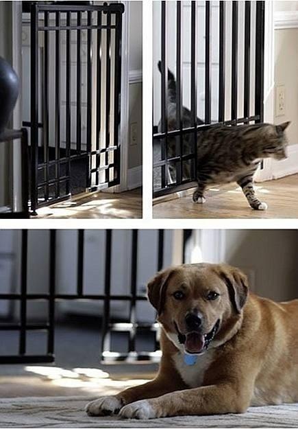 Stairway Pet Gate 13