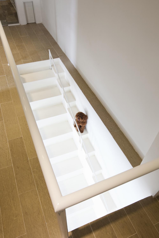 Stairway Pet Gate 3