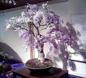 Artificial wisteria tree 17