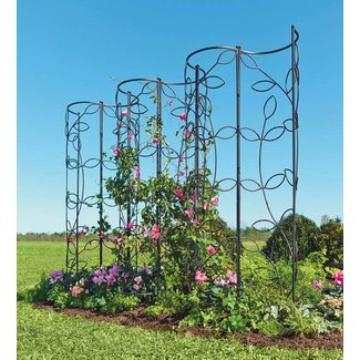 Garden Obelisk Trellis Ideas On Foter