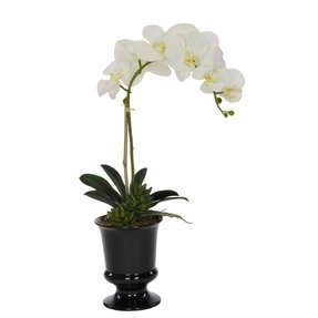 House of Silk Flowers Artificial White Phalaenopsis Orchid in Black Ceramic Urn