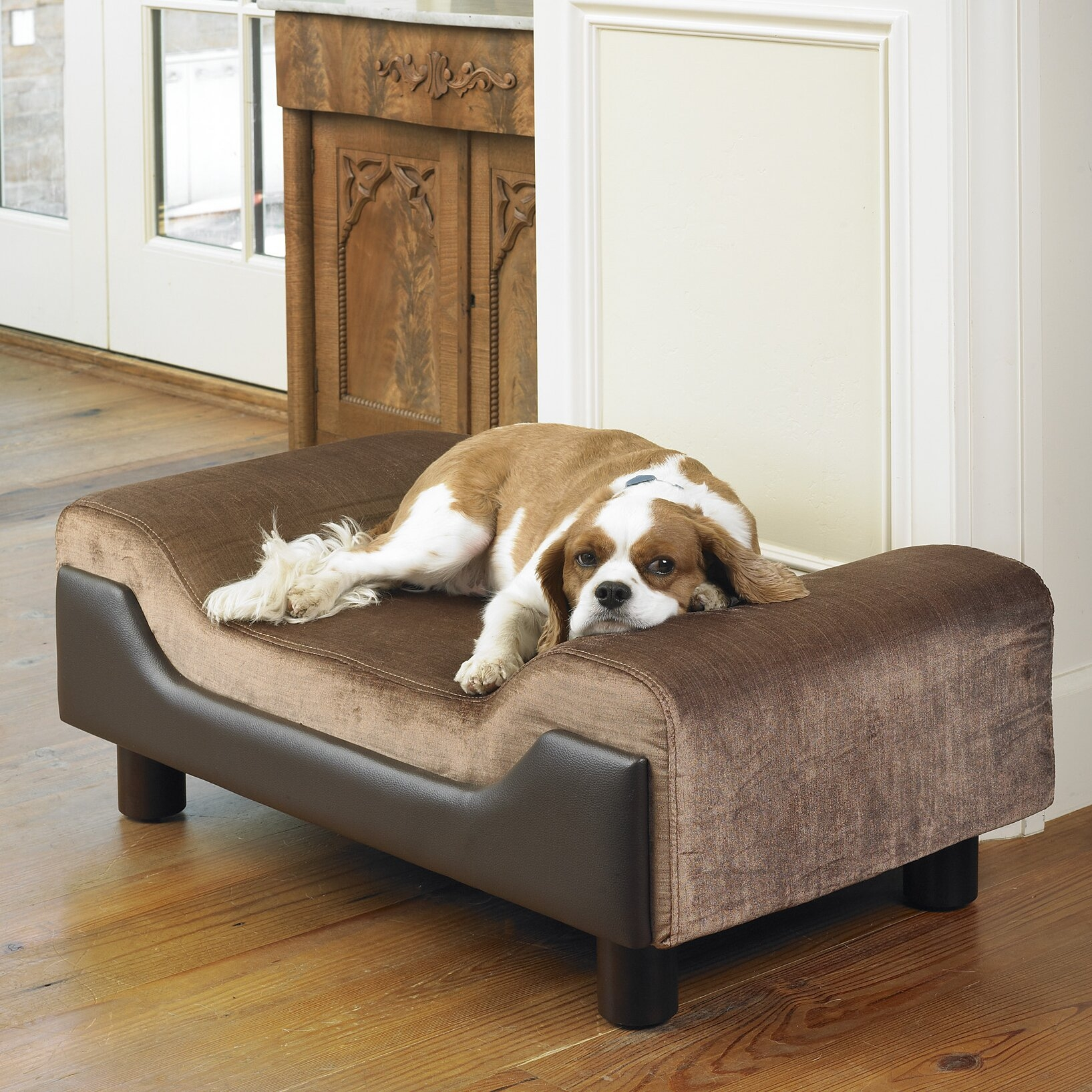 Dog / Pet Bed Elevated Contour Medium Size Contemporary Furniture Style  Sofa Day Bed