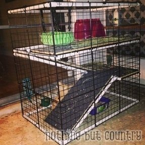 Cheap Animal Cages Foter