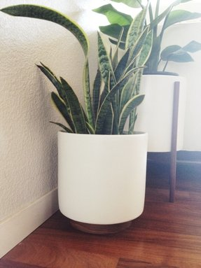 Indoor Decorative Planters