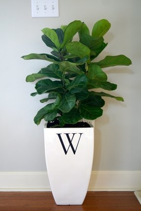 Large Indoor Planters Ideas On Foter