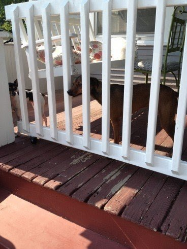 Amazing Porch Gate For Dogs