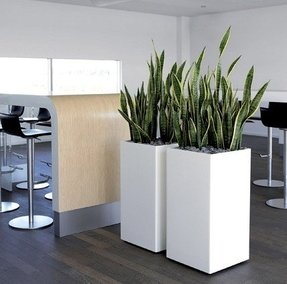 Large Indoor Planters - Foter