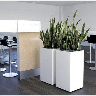 Tall Indoor Planters Ideas On Foter