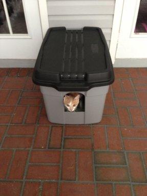 Cat Litter Box Enclosures Foter