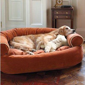 Pet Couch Bed Ideas On Foter