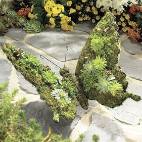Topiary for sale 31