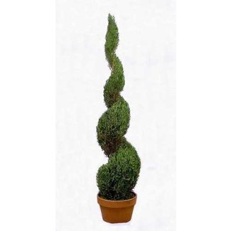 Topiary trees for sale 1