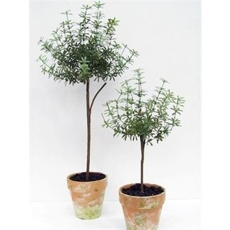 Topiary trees for sale 2