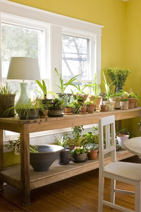 Indoor Plant Table Ideas On Foter