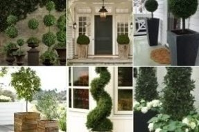Topiaries for front porch