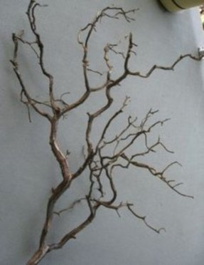 Wall mounted coat tree 1