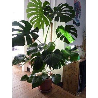 Large Indoor Plant Pots