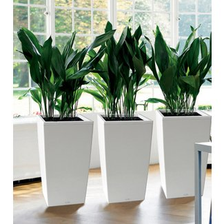 Tall Indoor Planters - Ideas on Foter