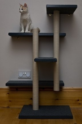 Cat climbing pole floor to ceiling