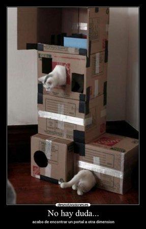 Cardboard Cat Tree Foter