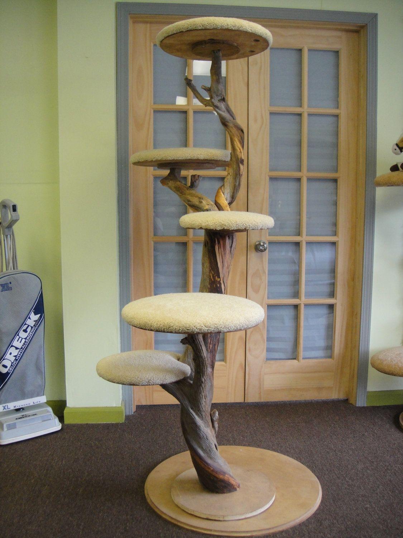 Large cat furniture Mature