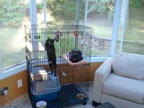 Playpen for cats 15