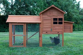 Chicken coop free shipping 10