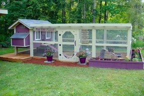 Chicken coops and runs for sale