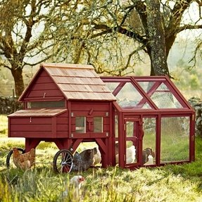 Buy chicken tractor