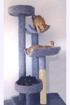 Cat condos for large cats 1