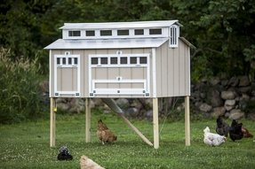 Cheap chicken coop for sale