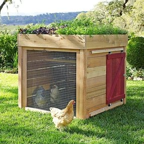 Chickens houses for sale