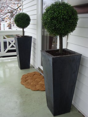 Topiaries for front porch 2
