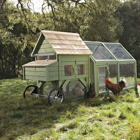 Buy chicken tractor 13