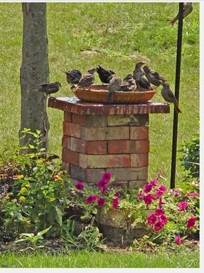 Bird bath planter ideas