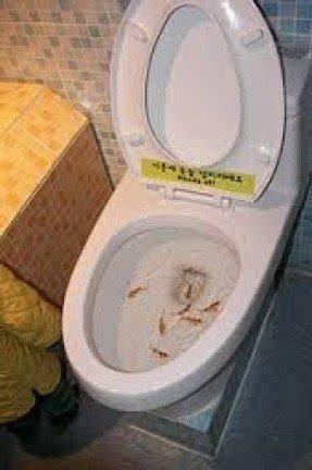 Aquarium Toilet Seat Foter