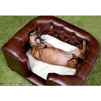 Leather pet sofa