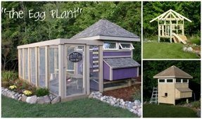 The eggplant chicken coop