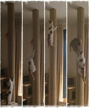 Sisal rope cat tree