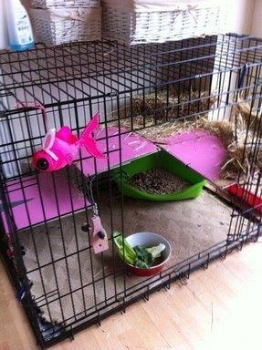 Indoor Cat Cages Foter