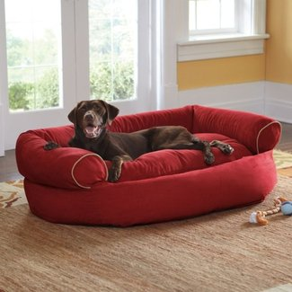 Magnificent Pet Couch Bed Ideas On Foter Short Links Chair Design For Home Short Linksinfo