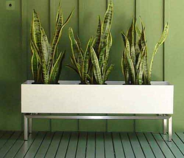 Indoor planter boxes 2