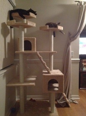 Cat Condos For Large Cats Foter