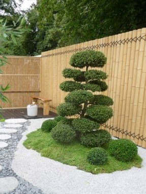 Topiary trees for sale 6