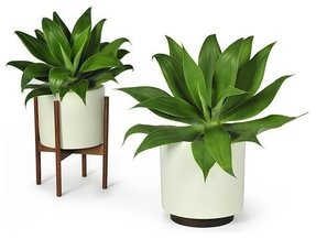 Accents Plants Pots Indoor Fountains Planters 86