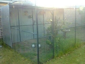 Aviaries For Sale Ideas On Foter