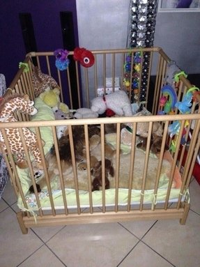 Toddler Playpen Large Ideas On Foter